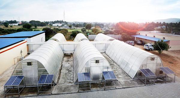 invernadero-solar-secado