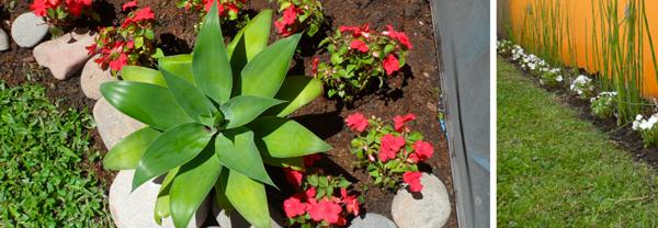 Plantas cu les son las que mejor resisten estar a la - Plantas que aguanten el sol ...