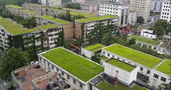 Terrazas Verdes Obligatorias En Edificios De La Ciudad De